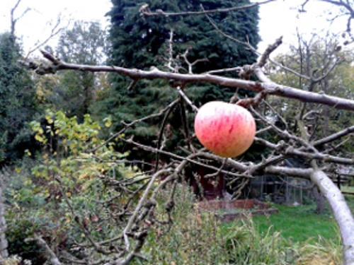 The Westacre orchard in November